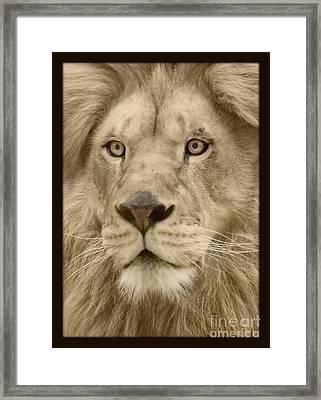 Majestic Lion Framed Print by Megan Wilson