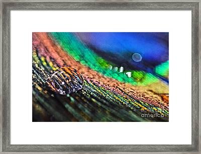 Majestic Plumage Framed Print