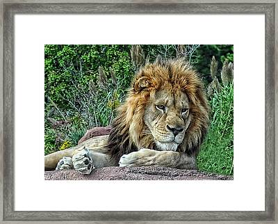 Majestic Framed Print by Tazz Anderson