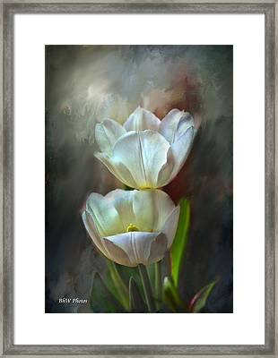 Majestic Tulips Framed Print by Bonnie Willis