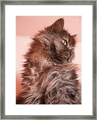 Majesty King Of The Home Framed Print by Zsuzsa Balla