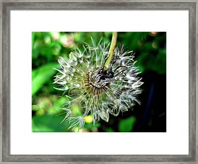 Make A Wish Framed Print by Norah Fairlock