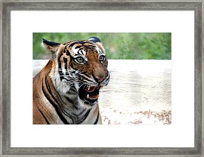 Framed Print featuring the photograph Make My Day by Kathy  White