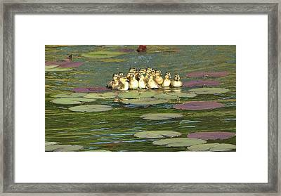 Framed Print featuring the photograph Make Way For Ducklings by Mary Zeman