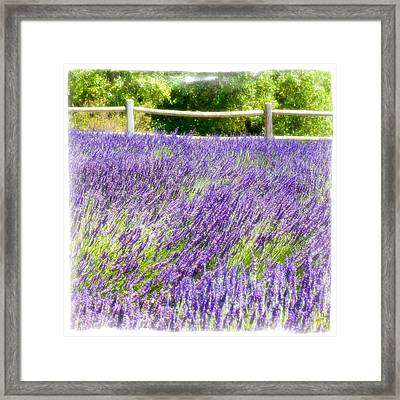 Framed Print featuring the photograph Makes Scents by Ryan Weddle