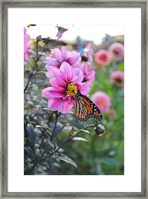 Framed Print featuring the photograph Making Things New by Michael Frank Jr