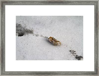 Making Tracks Framed Print by Betsy Knapp