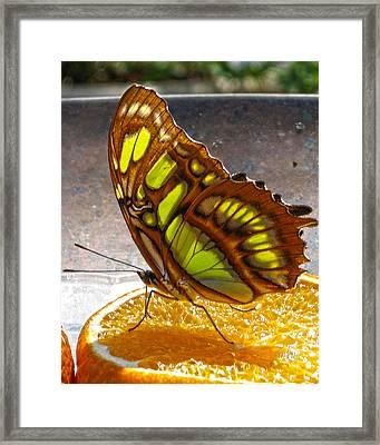 Malachite And Orange Framed Print