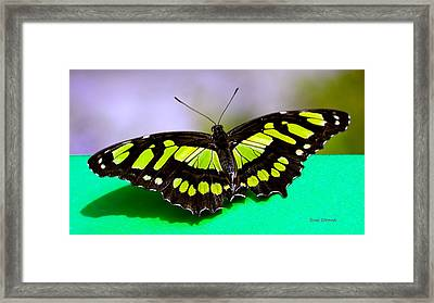 Framed Print featuring the photograph Malachite by Susi Stroud