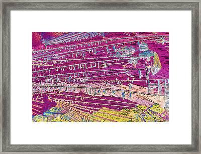 Malathion Framed Print by Michael W. Davidson