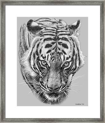 Malayan Tiger Framed Print by Larry Linton