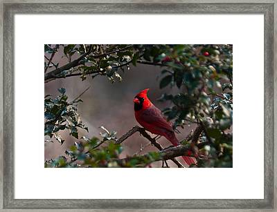 Male Cardinal Framed Print by Ron Smith