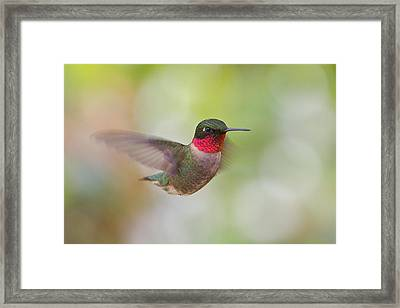 Male In Flight Framed Print