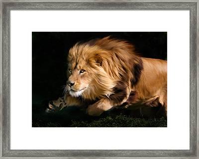 Male Lion Hunting Framed Print