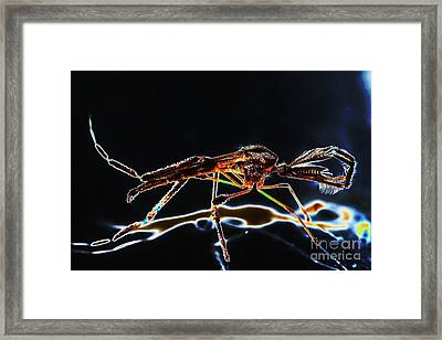 Male Mosquito Enhanced Framed Print by Lynda Dawson-Youngclaus