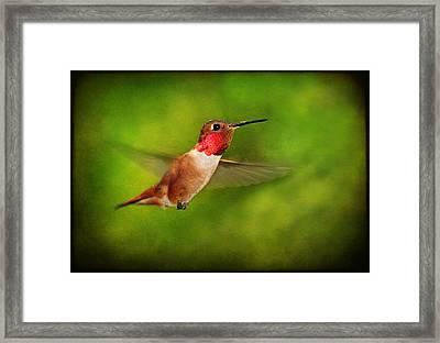 Male Rufous Hummingbird On Textured Background Framed Print