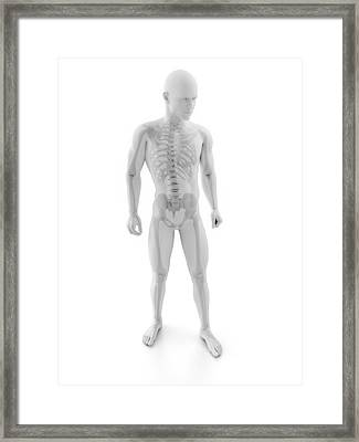 Male Skeleton, Artwork Framed Print by Sciepro