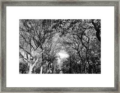 Mall Of Trees In Black And White Framed Print by Rob Hans