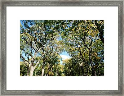Mall Of Trees Framed Print by Rob Hans