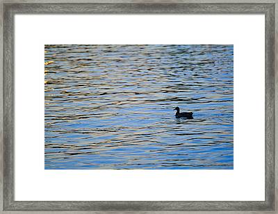 Framed Print featuring the photograph Mallard Duck And Blue Water by Marianne Campolongo