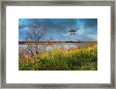 Mallards In The Spring . 7d12643 Framed Print by Wingsdomain Art and Photography