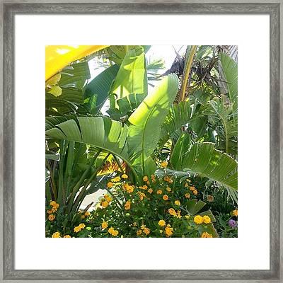 #malta #summer #plants Framed Print
