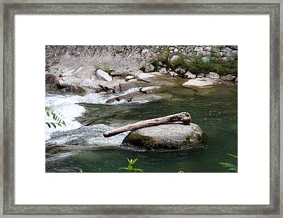 Mammoth Bone Framed Print by Christiane Schulze Art And Photography