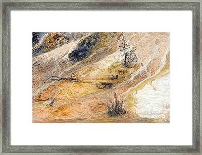 Mammoth Hot Springs Framed Print by Charline Xia