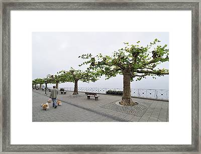 Man With Dog Walking On Empty Promenade With Trees Framed Print
