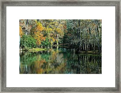 Manatee Spring Florida Framed Print by Ronald T Williams