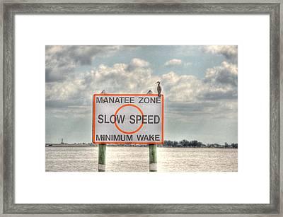 Manatee Zone Framed Print by Barry R Jones Jr