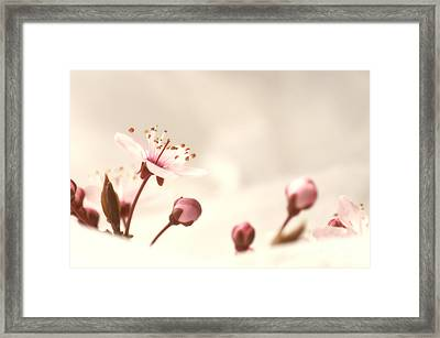 Mandelblueten Zeit Framed Print
