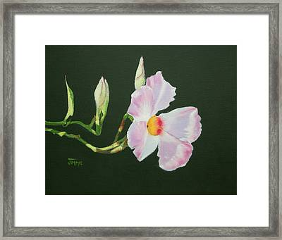 Framed Print featuring the painting Mandevilla Reaching Out by Jimmie Bartlett