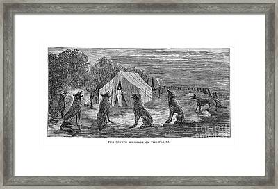 Mango Hummingbird Framed Print by Granger
