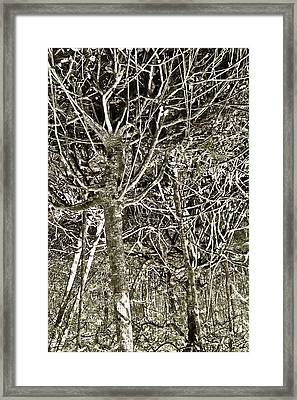 Mangrove Abstract Framed Print