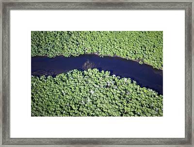 Mangrove River Framed Print by Alexis Rosenfeld