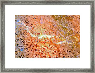Mangroves Framed Print by Andres LaBrada