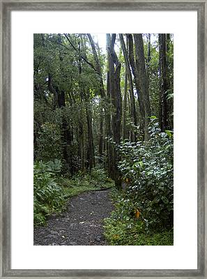 Manoa Falls Hiking Trail In Honolulu Framed Print by Stacy Gold