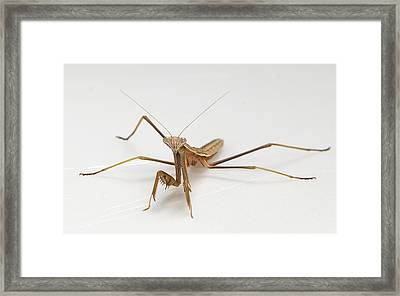 Framed Print featuring the photograph Mantis 1 by John Crothers