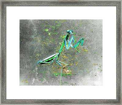 Mantis 1 Framed Print by Arne Hansen