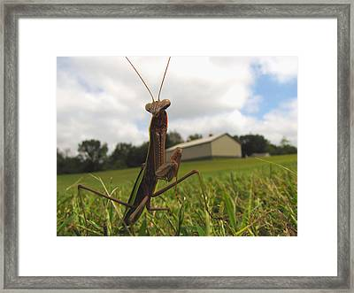 Framed Print featuring the photograph Mantis by John Crothers
