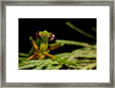 Mantis Framed Print by Tim Nichols