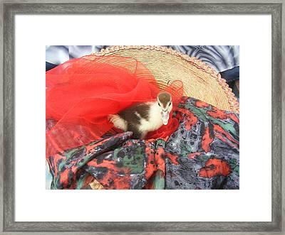 Framed Print featuring the painting Manuela The Duck by Bogdan Floridana Oana
