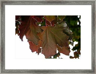 Framed Print featuring the photograph Maple 2 by Tikvah's Hope
