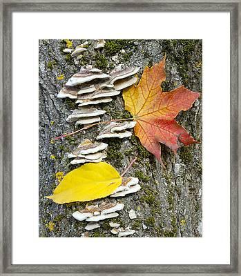 Maple Autumn Leaf On A Tree Trunk Framed Print