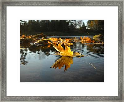 Maple Leaf Floating In River Framed Print