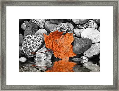 Maple Leaf Framed Print by Ms Judi