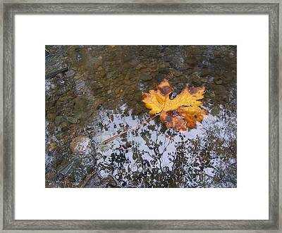 Maple Leaf Reflection 3 Framed Print