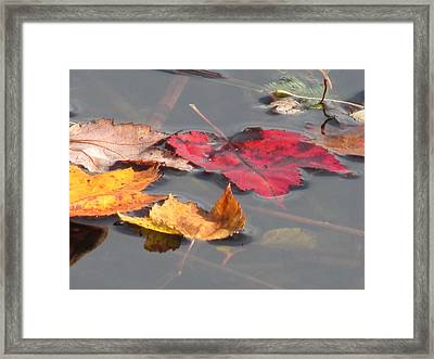 Maple Leaf Reflection Framed Print