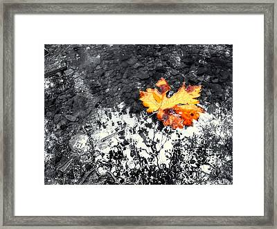 Maple Leaf Selective Color Framed Print
